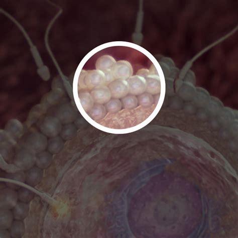 Conception Fetal Development  Babycentre Uk