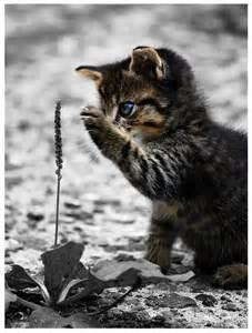 Curious Kitten Kitty Cat