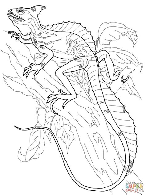 monitor lizard coloring pages   print