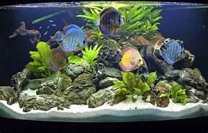 Aquarium Einrichten Anfänger : was anf nger beim aquarium beachten m ssen panorama ~ Lizthompson.info Haus und Dekorationen