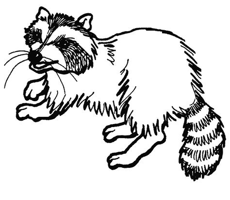 raccoon coloring pages getcoloringpagescom