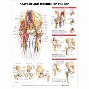 Hip Injuries Poster