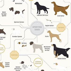 The Diagram Of Dogs Wall Poster 46 X 16cm