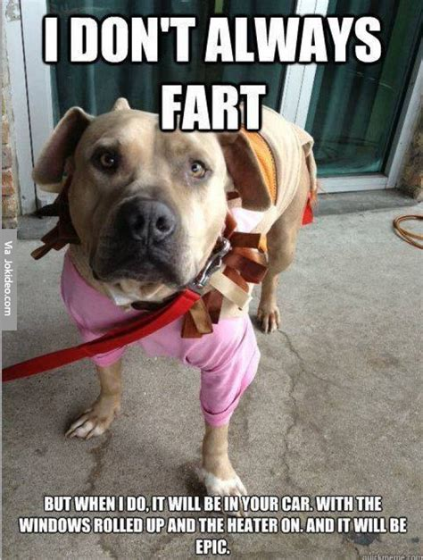 Funny Fart Memes - i dont always fart dog meme