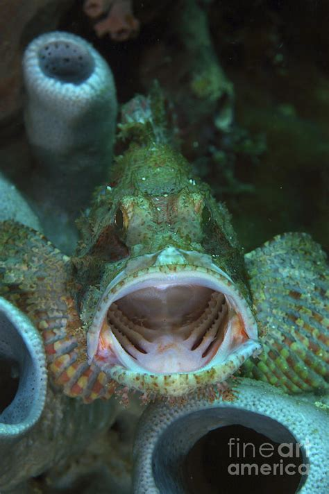 grouper mouth open meur mathieu north photograph portrait 29th uploaded january which