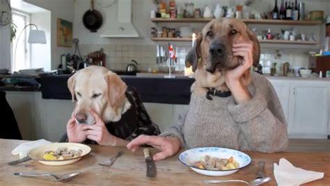 Watch Viral German Shepherd Dog Odin Eating Peanut