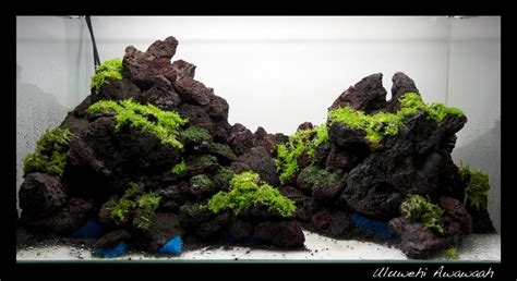 green reef optiwhite xx aquascaping world forum