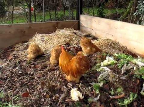 huehner auf dem kompost youtube