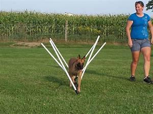 dog agility equipment related keywords dog agility With best dog agility equipment