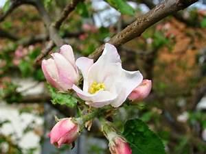 Rosa Blühende Bäume April : schlossgassen gefl ster bl hende b ume ~ Michelbontemps.com Haus und Dekorationen