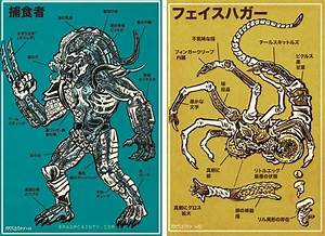 An Illustrated Anatomical Guide To Popular Monsters By