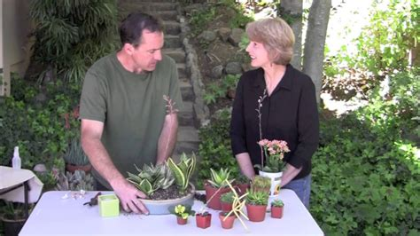 light succulent dish garden youtube