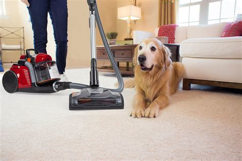 The Ultimate Guide to Buying the Best Vacuum for Pet Hair 2018