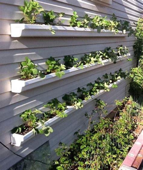 Gutter Vertical Garden by Gutters As Planters Vertical Garden