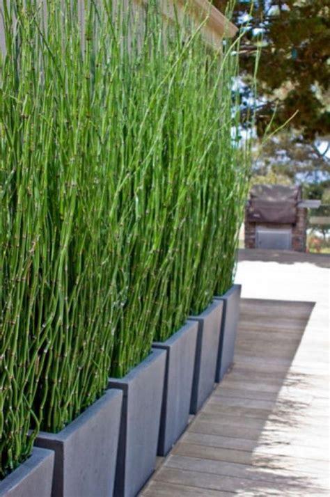 bambus als sichtschutz im garten oder auf dem balkon garten sichtschutz garten bambus