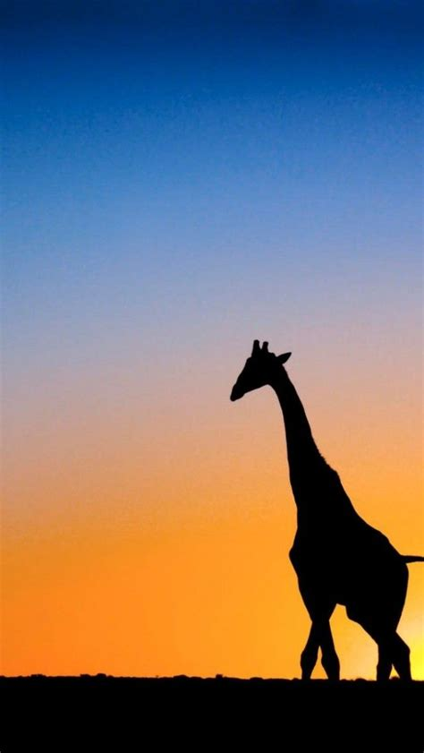 ideas  giraffe love  pinterest home