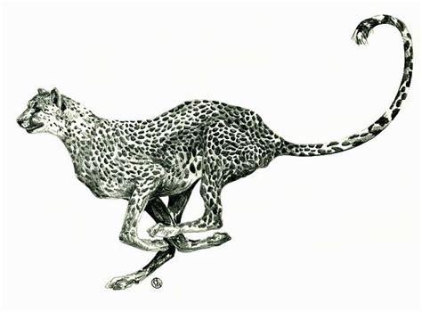 running cheetah drawing art paintings dance matador