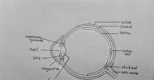Draw It Neat   How To Draw Human Eye Section