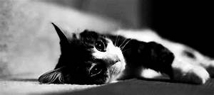 cute cat gif on Tumblr