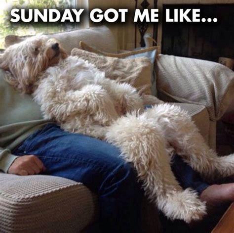 Funny Sunday Memes - funny dog sunday memes