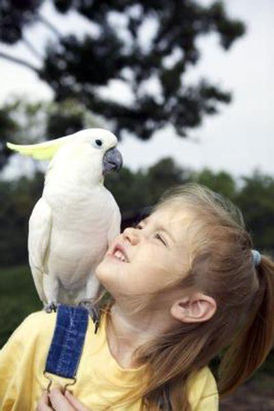 birds  cuddle   pets