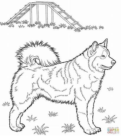 Husky Coloring Pages Dog Printable Siberian Dogs