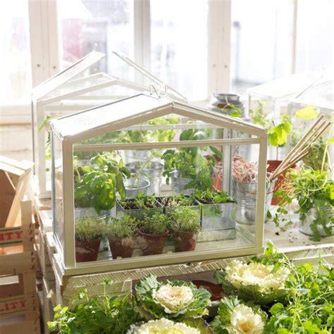 plantes aromatiques cuisine 1000 idées à propos de jardin d 39 intérieur d 39 herbes