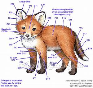 Fox Cub Coloring Guide By Crafts