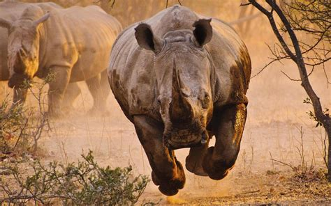 Wallpaper Animals - animals rhino desert nature wallpapers hd