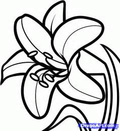 casablanca lilies flower outline coloring home