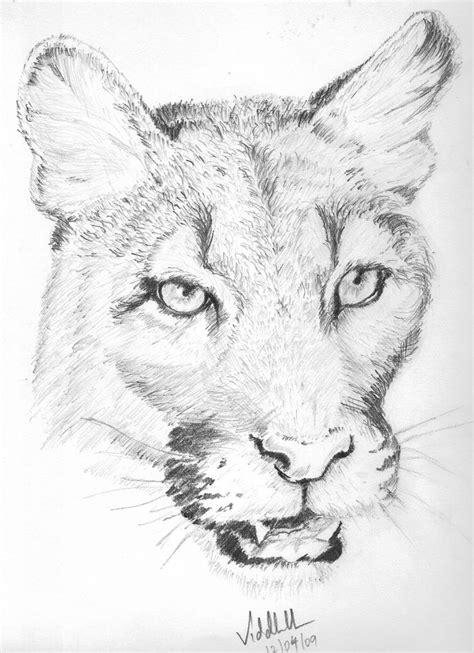 animal pencil sketch light  shade pencile sketches