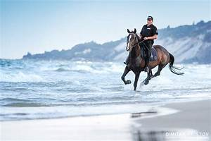horses running in the water 54ka photo