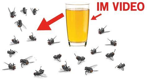 hausmittel gegen kakerlaken diese hausmittel helfen gegen m 252 cken fliegen und sogar kakerlaken