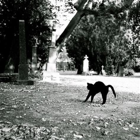 images  cats  cemeteries  pinterest cat