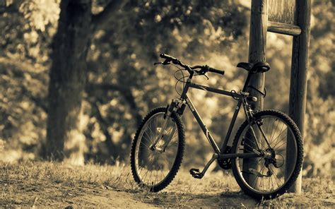 miscellaneous bike bicycle nature sports tree leaves blur