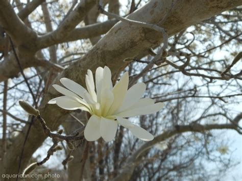 early blooming white flower tree pin by stephanie w on fae of etsy enchanted etsy pinterest