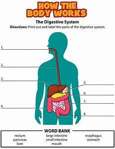 Kidshealth  Activity  Digestive System
