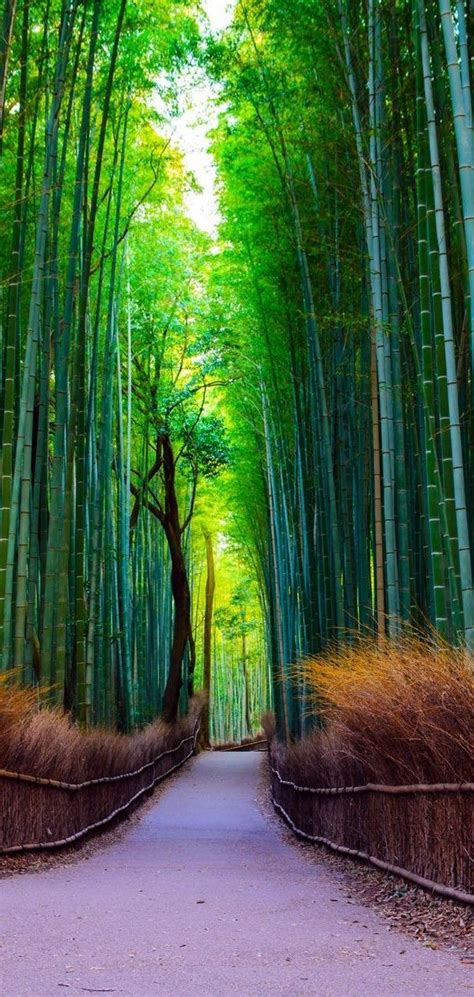las mejores imagenes de paisajes naturaleza increible