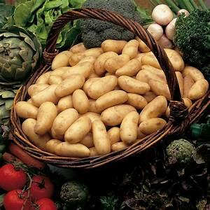 Période Pour Planter Les Pommes De Terre : pomme de terre amandine pommes de terre meilland richardier ~ Melissatoandfro.com Idées de Décoration