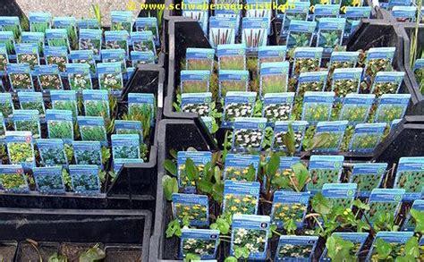 Teichpflanzen Fuer Verschiedene Wasserzonen by Forum Teichpflanzen
