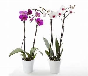 Comment Soigner Une Orchidée : engrais orchid e fait maison ventana blog ~ Farleysfitness.com Idées de Décoration