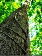 Grow Up How To Design Vertical Gardens For Tiny Spaces Climbingbeans – Inha