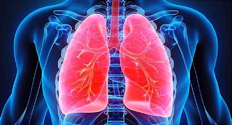 asbestos related health risks fibresafe nz asbestos