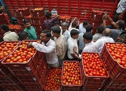 Tomato Prices Delhi Market Business Tomatoes India