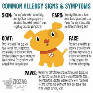 dog allergies are the worst With dog food allergy symptoms