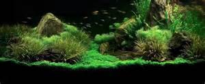 Ehmm un aiutino acquario per guppy forum