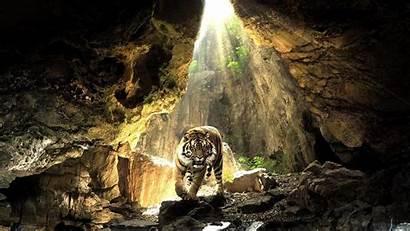 Tiger Cave Wallpapers 1080p Desktop Animals Animal