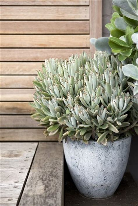 how to care for potted succulents 104 best peter fudge gardens images on pinterest modern gardens beautiful gardens and coastal