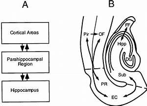 A  Simple Schematic Diagram Of Cortical