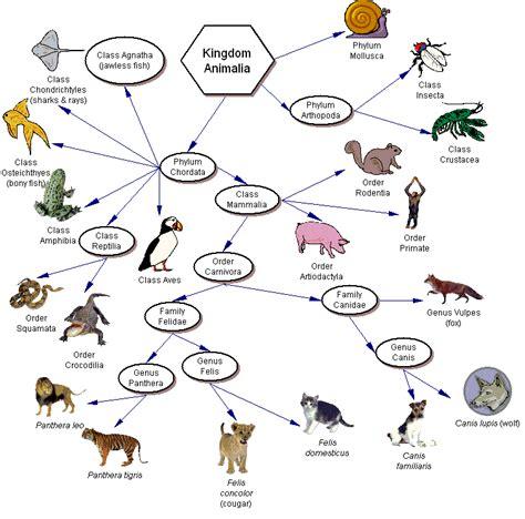 evolution taxonomy